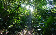 Footpath In The Jungle Of Cost...