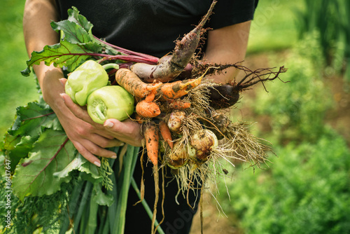 Fotomural Fresh vegetables