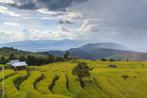 Fotobehang Rijstvelden Green Terraced Rice Field in Pa Pong Pieng , Mae Chaem, Chiang Mai, Thailand