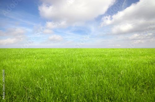 Montage in der Fensternische Gras Green grass field with bright blue sky