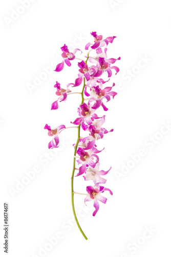 Close up of orchids on white background