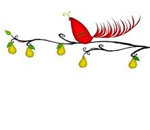 Partridge In A Pear Tree Copy ...