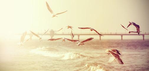 Fototapeta Vintage retro stylized photo of a seagulls, old film effect.