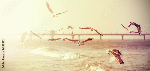 Poster Retro Vintage retro stylized photo of a seagulls, old film effect.