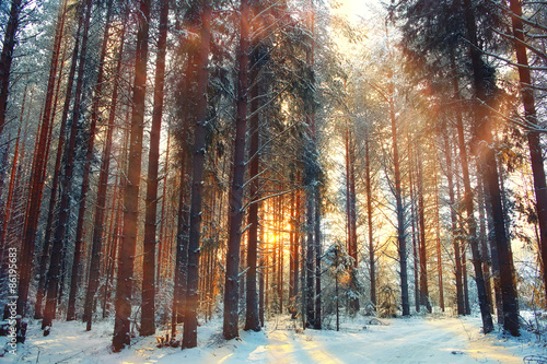 Poster Marron chocolat winter forest landscape sun rays