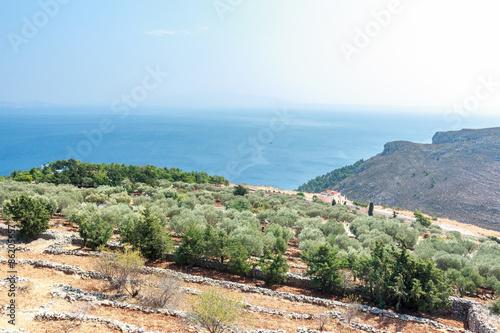 Photo sur Toile Oliviers Olive trees and Mediterranean villa on Greek Kalymnos island