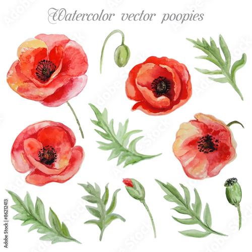 wektorowy-ustawiajacy-czerwoni-akwarela-makowi-kwiaty