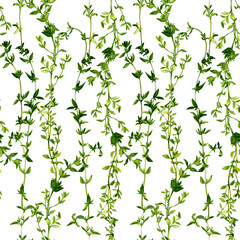 Panel Szklany Podświetlane Do restauracji seamless pattern with branches of thyme