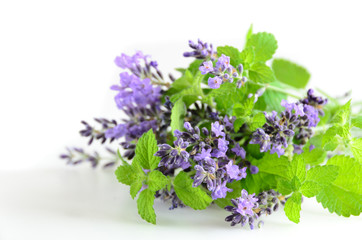 lavender and mint on white background