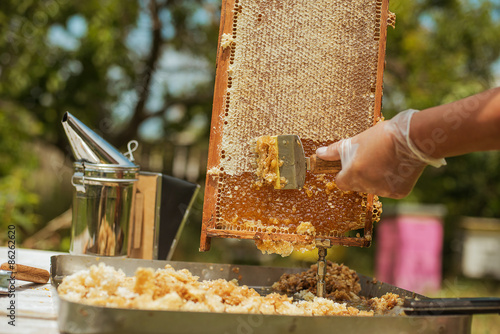 Photo beekeeper collects the honey