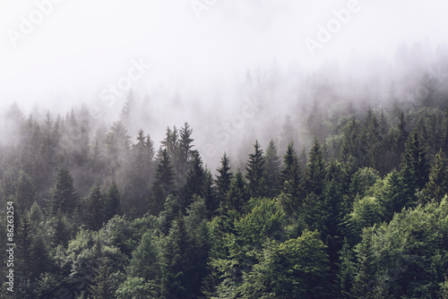 Poster Bossen Forested mountain slope in low lying cloud