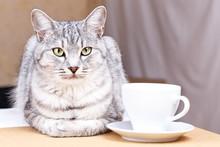 White Tea Mug Cat