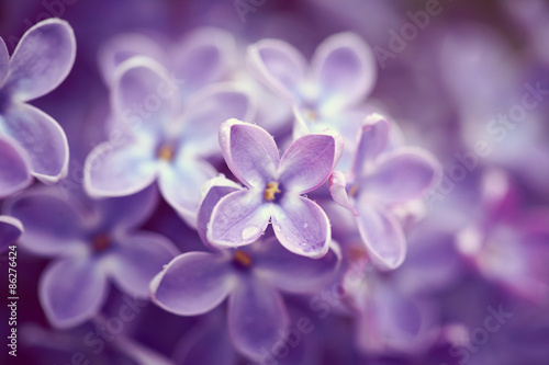Spoed Foto op Canvas Lilac Lilac flowers close up