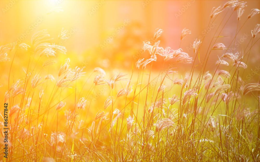Fototapety, obrazy: Grass in the morning