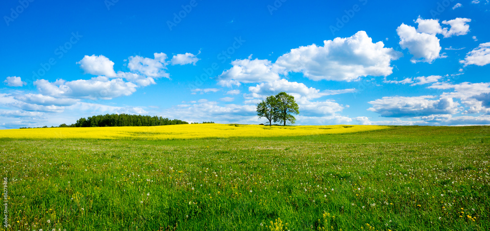 Fototapety, obrazy: Beautiful summer landscape