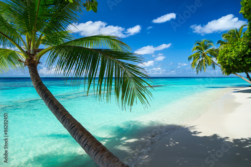 Foto-Schiebegardine Komplettsystem - coco palm on tropical paradise beach with turquoise blue water and blue sky