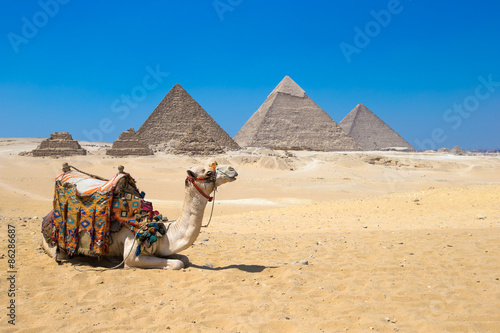 Photo sur Aluminium Chameau Giza in Cairo, Egypt.