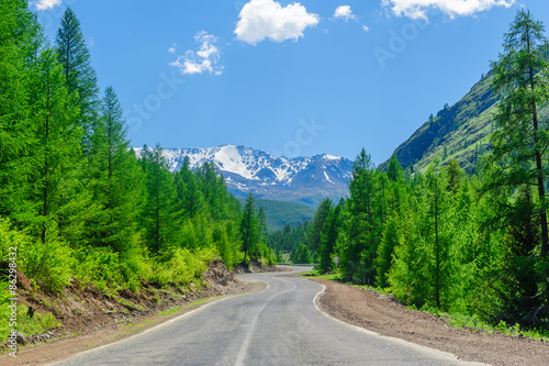 Foto op Plexiglas Groene Road passing among high pinetrees in Altai in summer
