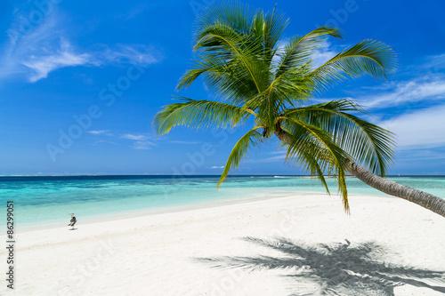 Foto-Kissen - coco palm and heron bird on paradise beach (von stockphoto-graf)