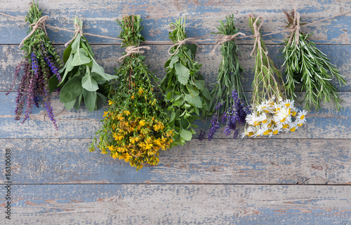 Photo  Various fresh herbs hanging on a leash