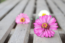 Zinnia Flowers On A Wooden Background