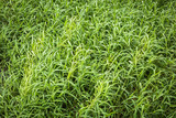 Green hollow grass background texture.