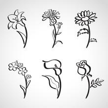 Ink Style  Sketch Set - Summer Flowers