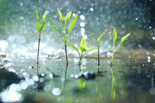 Grass Dew Rain Macro Fresh Green Eco