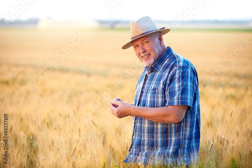 Obraz na plátně  Senior farmer checks wheat grain, smiling