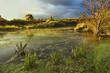 Lichtstimmung am Teich