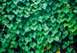Heart shaped Leaves valentine's day background.