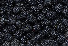 Many Blackberry