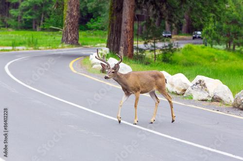 Deurstickers Hert Deer crossing the street.
