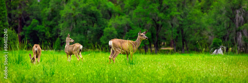 Fotografie, Obraz  Deers on the green meadow.