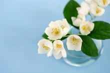 Small Bouquet Of Jasmine On Light Blue Background
