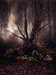 Stare drzewo z czaszkami w jesiennym lesie