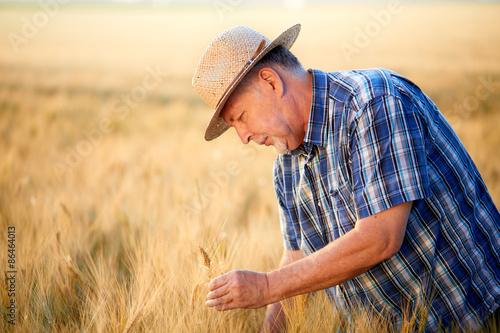 Fotografie, Obraz  Senior farmer with straw hat checks barley grain