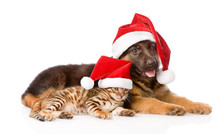 Cat And Dog With Red Hat. Focus On Cat. Isolated On White Backgr