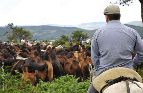 Fotografia Rapa das Bestas de Sabucedo