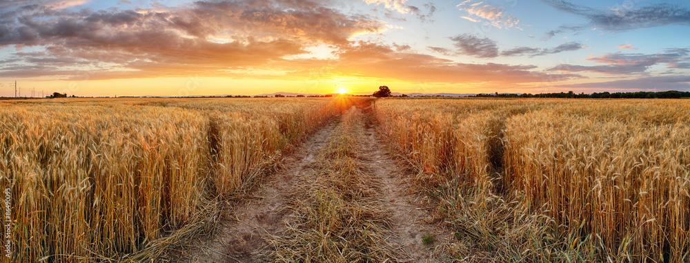 Fototapety, obrazy: Wheat field at sunset, panorama