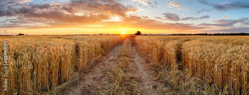 Garden Poster Culture Wheat field at sunset, panorama