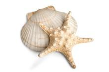 Sand Dollar, Starfish, Sand.