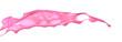 Pink paint splashing isolated on white background73