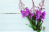 Fototapeta Kwiaty - kwiaty polne