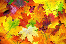 Autumn Colorful Leaves Background