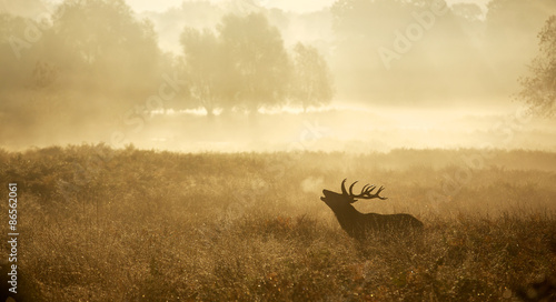 Poster Deer Misty deer silhouette landscape