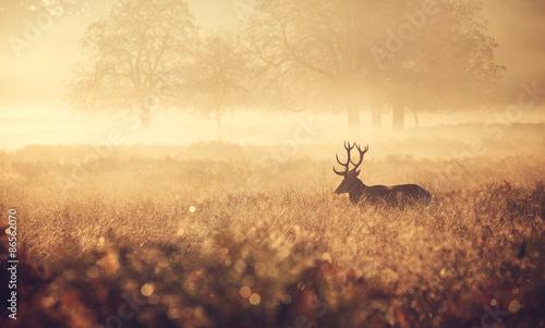 Poster Chasse Misty deer silhouette landscape