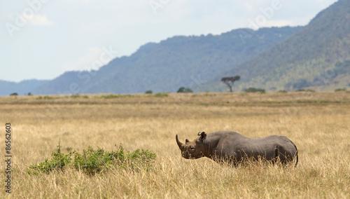 Spoed Foto op Canvas Neushoorn Black rihno in Kenya