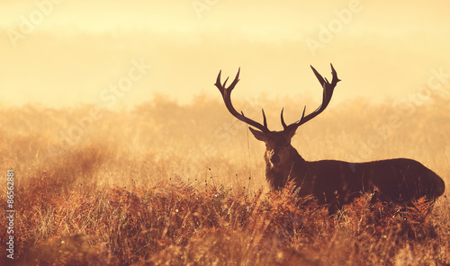 Aluminium Prints Deer Red deer