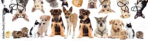 Poster Chien set pets